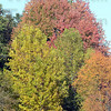 Tribune-Star/Jim Avelis<br /> Fall foliage: Maples and other trees are putting on their Fall colors.