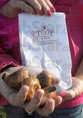 Tribune-Star/Lisa Trigg<br /> In honor of Breast Cancer Awareness Month: Pink tulip bulbs can be purchased by the bag at the Wabash Valley affiliate office of Susan G. Komen for the Cure at the Meadows during October.