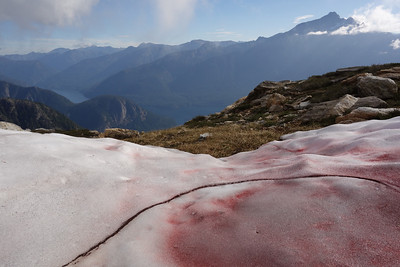 So called Watermelon Snow, with the brooding flank of Jack Mountain behind.