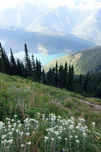 Maybe 7:30, and I'm now in the beautiful meadows at least  3000' above Diablo lake. The trailhead was at the foot of Diablo dam. This is a big climb!
