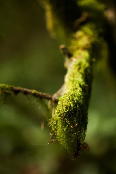 Moss coats a dead branch as sun trickles through the upper branches.