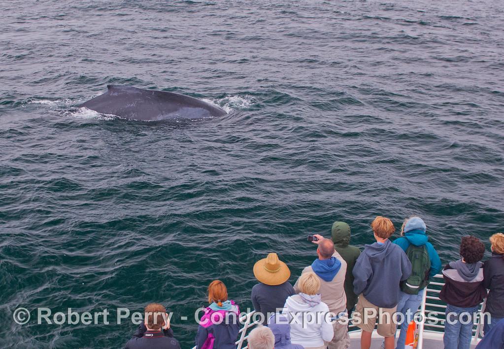 Megaptera novaeangliae ROPE & passengers 2012 06-20 SB Channel-a-006