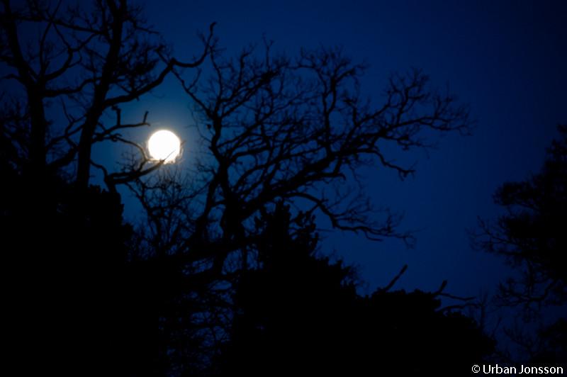 Vid läggdags hade fullmånen kommit fram.