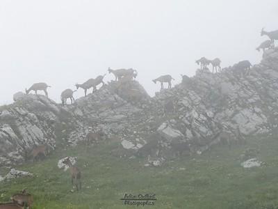 Mont Colombier - Col du Colombier