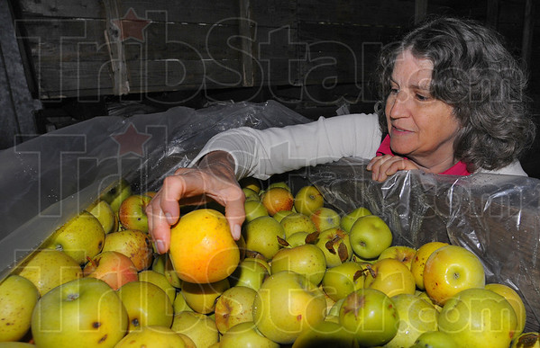 Tribune-Star/Jim Avelis<br /> Cooked: Judy Ditzler holds a sunburned apple, a victim of the record hot summer. Other apples  destined for the cider press were scarred by the late freeze in April that killed about 90 percent of the blossoms.