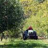Tribune-Star/Jim Avelis<br /> Making a path: Mauri Ditzler mows the rows between apple trees at Ditzler Orchards in southern Parke County. The late freeze last April killed blossoms from the ground up, leaving some at the top of some trees.