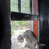 Tribune-Star/Jim Avelis<br /> Perfect perch: One of the Corcoran's shelter rescue cats rests on an extra wide windowsill. The 14 inch thick brick walls require the wider sills.