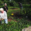 Tribune-Star/Joseph C. Garza<br /> A gem in our community: Marilyn Clark, foreground, and fellow volunteers Dorothy Wilson and Jerri Boone work on the Clark-Landsbaum Deming Park Holly Arboretum Saturday.