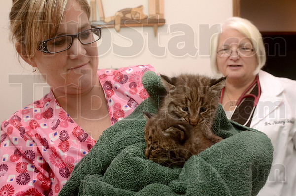Tribune-Star/Joseph C. Garza<br /> Four weeks old: Jamie Booe, officer manager at Pet Care Animal Hospital, holds the pair of female bobcat kittens brought into the hospital Tuesday. At right is Dr. Nancy Schenck, D.V.M.