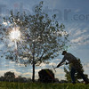 Tribune-Star/Joseph C. Garza<br /> Bases are covered: Indiana State University groundskeeper Willie Lester is silhouetted by Wednesday's mid-morning sun as the spreads mulch around a tree near Memorial Stadium.