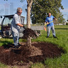 Tribune-Star/Joseph C. Garza<br /> Go Trees!: Indiana State University groundskeeper Mark Stephens covers the base of a tree with mulch as co-worker Jim Greaver brings another scoop Wednesday at Memorial Stadium.