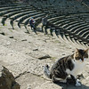 Cat and amphitheater at Ostia Antica.