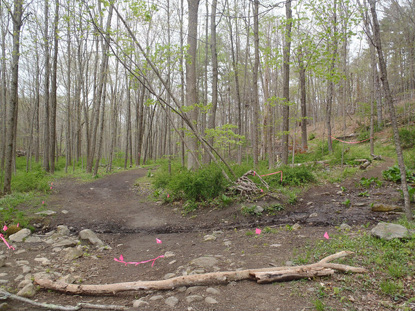 Switchback out of Pine Forest - 2012 Loop Photos by David Gordon