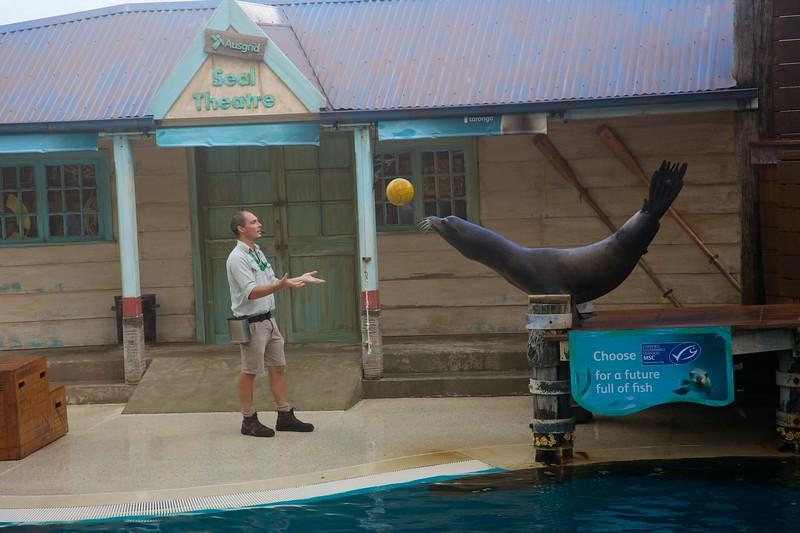 Seal-crobatics (1).