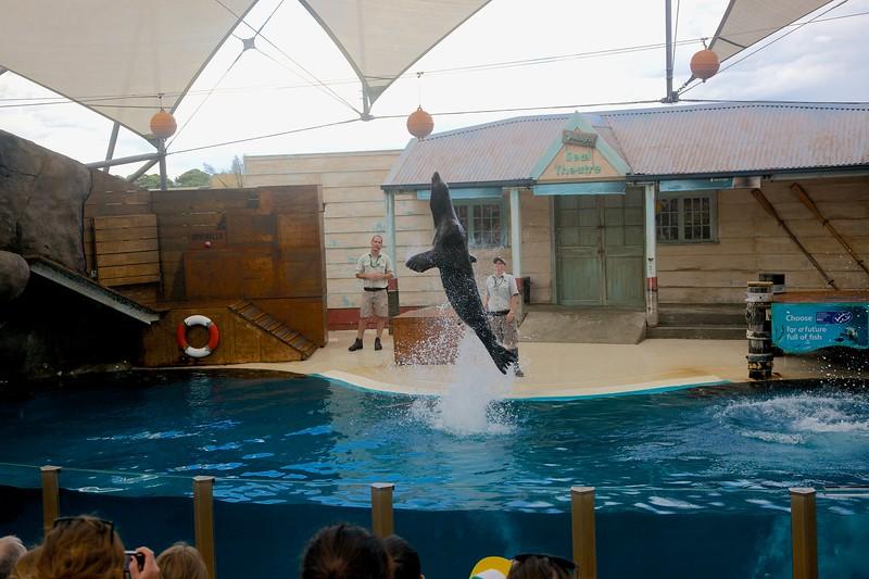 Seal-crobatics (2).