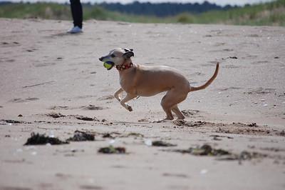 Tentsmuir Beach 01/06/2012