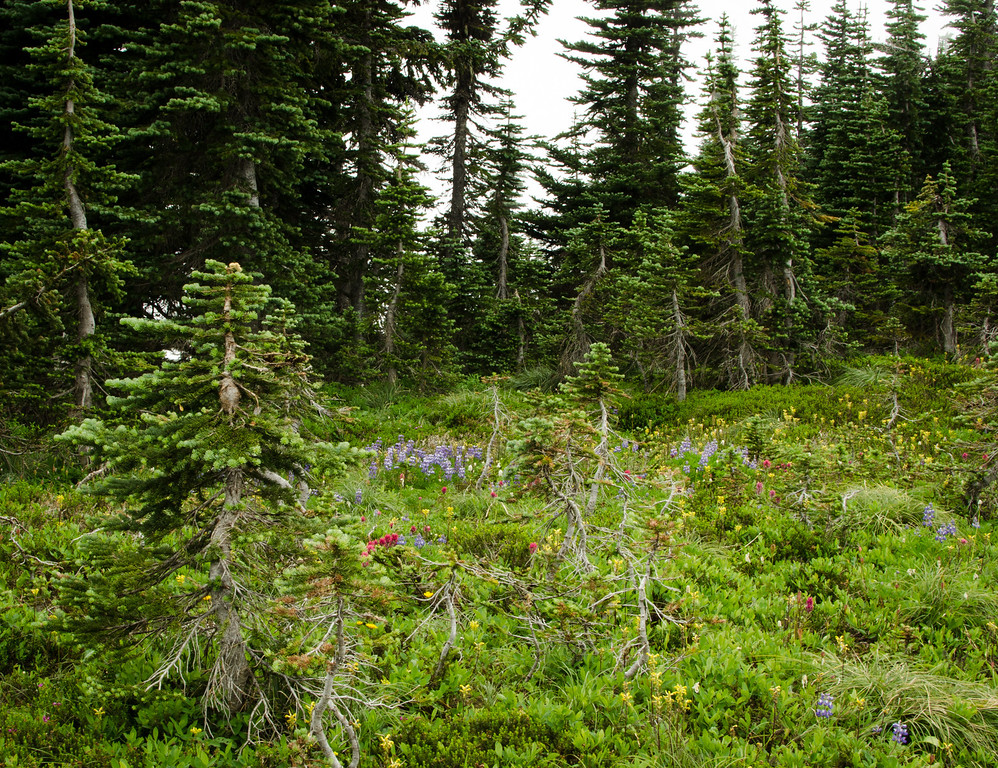 The tree-line wildflowers and stunted trees looked like tiny bonsai gardens.