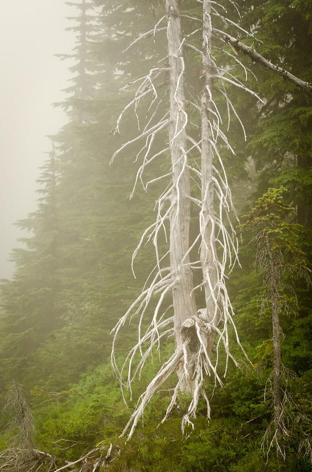 Ghost tree.