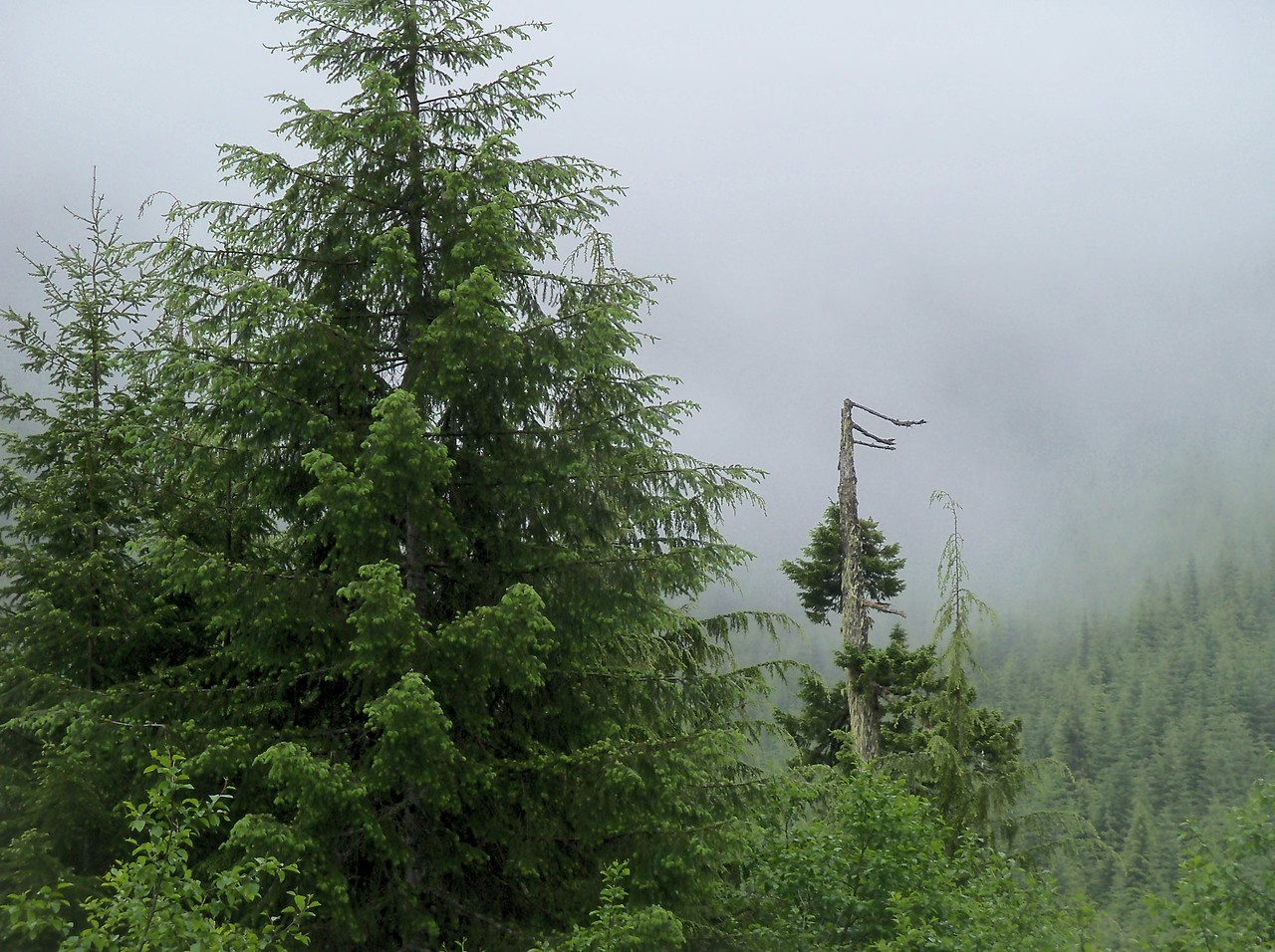 Friday June 29th.. Weather was cloudy in Shelton but became very wet as we rode into the mountains..