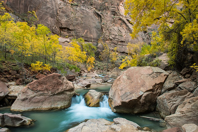 Autumn colors along the Virgin River, near the Temple of Sinawava