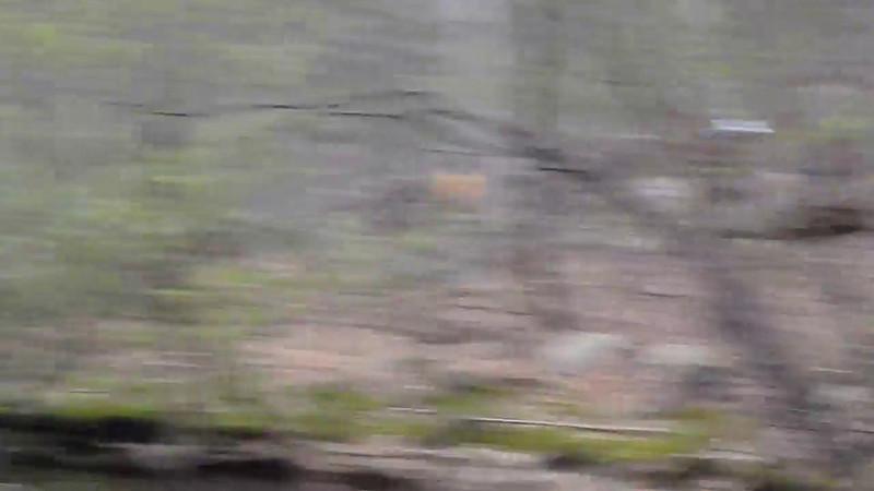Video of First Water Crossing - 2012 Loop Photos by David Gordon