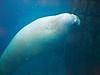 seaworld walrus san diego