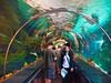 seaworld shark tank san diego