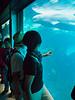 mum dad seaworld beluga whale san diego