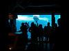 seaworld beluga whale san diego b