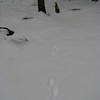 Two inches of fresh snow meant that we saw lots of prints