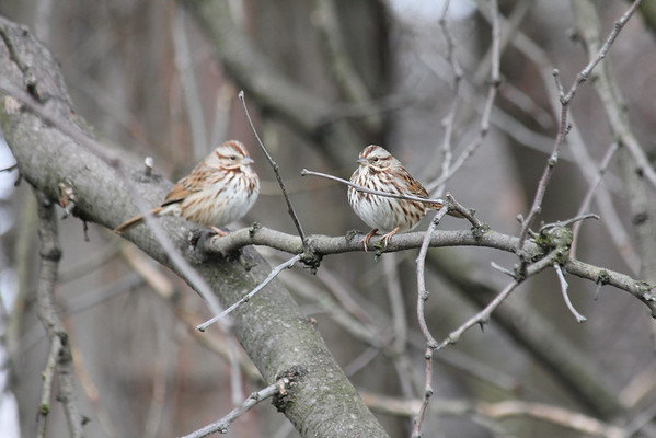 Schenley Park Small Birds 1-12