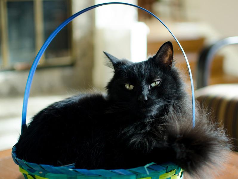 Dexter:  If I fits, I sits.