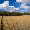 Crossing Delaney Meadow