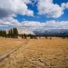 Meadow south of Ragged Peak