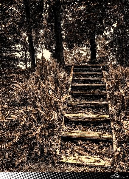 EscalierRustique