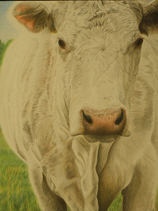 "Gold Medal winner - Junior Hannah Tamplain's portrait drawn with colored pencils, of a white cow, called ""The Lady of Winnesboro"" Hannah Tamplain's beautiful pencil drawing of a white horse's portrait was in the art auction. Her lot was 15 out of 54 and her art piece was sold for $22,000. She will receive a percentage of that The top rodeo art piece sold for $210,000. That student will receive $20,000 CASH!! Congratulations to Hannah!!"