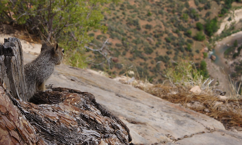 Even this full-time resident of Angels Landing doesn't tire of admiring the view from 1,400 feet over the valley floor!
