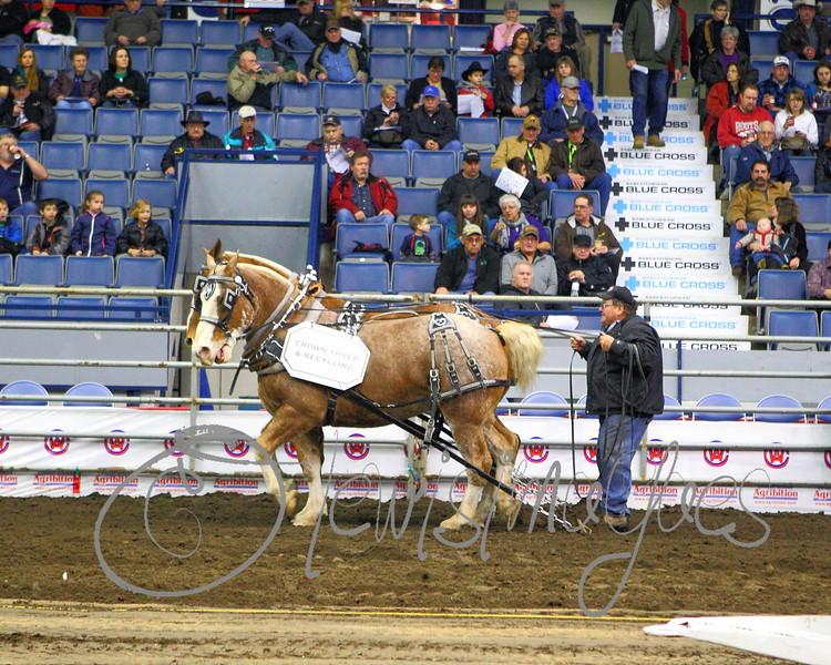 LI3_3618_Lt_Mid_HorsePull