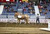 LI3_3613_Lt_Mid_HorsePull
