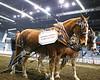 LI3_3621_Lt_Mid_HorsePull