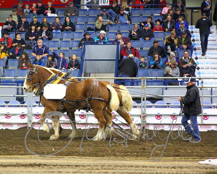 LI3_3615_Lt_Mid_HorsePull