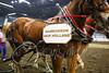 LI3_3611_Lt_Mid_HorsePull