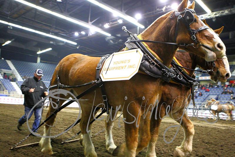 LI3_3619_Lt_Mid_HorsePull