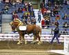 LI3_3620_Lt_Mid_HorsePull