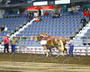 LI3_3614_Lt_Mid_HorsePull