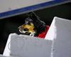 LI3_1493_StockDogs_AM2012