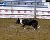 LI3_1503_StockDogs_AM2012