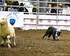 LI3_3254_StockDogs_Final_2012