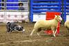 LI3_3261_StockDogs_Final_2012