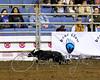 LI3_3250_StockDogs_Final_2012